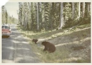 66 road trip bears sighted 2